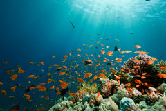 Koraal, oceaan en vissen stock foto's