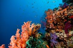 Koraal, oceaan en vissen Royalty-vrije Stock Afbeeldingen