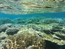 Koraal onderwater bij Maledivisch Stock Foto's