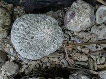 Koraal op de kust stock afbeeldingen
