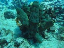 Koraal op de zeebedding stock foto