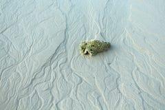 Koraal op het strand Royalty-vrije Stock Afbeeldingen