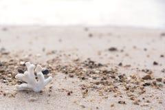 Koraal op het strand Stock Afbeeldingen