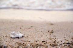 Koraal op het strand Stock Foto's