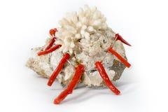 Koraal op steen met halsband die van koralen wordt gemaakt Stock Foto's