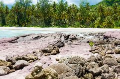 Koraal overzeese kustmening stock afbeeldingen