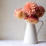 Koraal roze dahlia's Stock Afbeelding