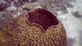 Koraal in vorm van een gebied in oceaan van Filippijnen stock footage