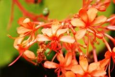 Koraalbloemen stock afbeeldingen