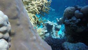 Koraalbloemen Vissen van het koraalrif stock videobeelden