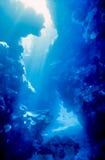 Koraalcanion stock foto