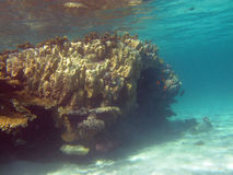 Koraalrif bij de bodem van tropische overzees onder de waterspiegel Stock Fotografie