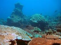 Koraalrif in blauwe overzees stock foto