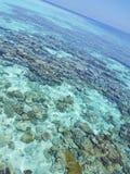 Koraalrif in de Maldiven Stock Afbeeldingen