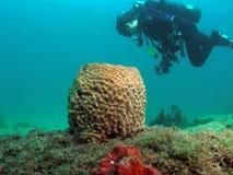 Koraalrif en scuba-duiker royalty-vrije stock fotografie