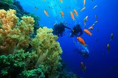 Koraalrif en Scuba-duikers Royalty-vrije Stock Foto