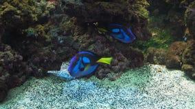 Koraalrif en Tropische Vissen stock video
