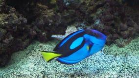 Koraalrif en Tropische Vissen stock footage