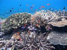 Koraalrif en Tropische Vissen Royalty-vrije Stock Afbeelding