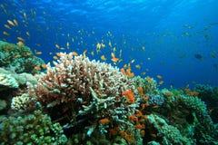 Koraalrif en Tropische Vissen royalty-vrije stock fotografie