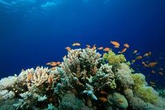 Koraalrif en Tropische Vissen royalty-vrije stock foto