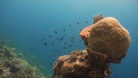 Koraalrif en Tropische Vissen filippijnen stock videobeelden