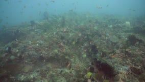 Koraalrif en Tropische Vissen Filippijnen, Mindoro stock videobeelden