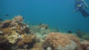 Koraalrif en Tropische Vissen Filippijnen, Mindoro royalty-vrije stock fotografie