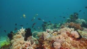 Koraalrif en Tropische Vissen Filippijnen, Mindoro stock foto
