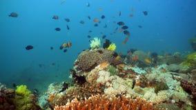 Koraalrif en Tropische Vissen Filippijnen, Mindoro stock afbeeldingen
