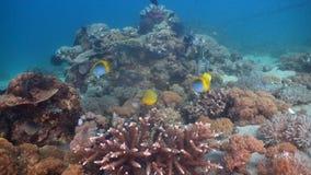 Koraalrif en Tropische Vissen Filippijnen, Mindoro royalty-vrije stock foto