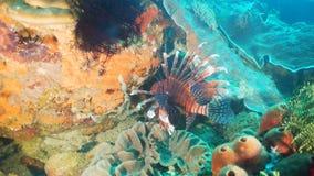 Koraalrif en Tropische Vissen Filippijnen, Mindoro royalty-vrije stock foto's