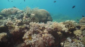 Koraalrif en Tropische Vissen Filippijnen, Mindoro royalty-vrije stock afbeeldingen