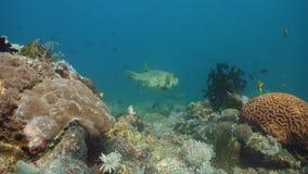 Koraalrif en Tropische Vissen Filippijnen, Mindoro royalty-vrije stock afbeelding