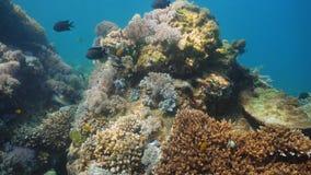 Koraalrif en Tropische Vissen Filippijnen, Mindoro stock fotografie