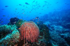 Koraalrif en vissen onderwater Royalty-vrije Stock Fotografie