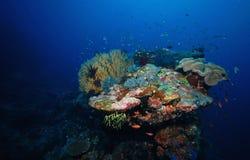 Koraalrif en vissen onderwater stock foto