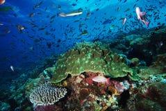 Koraalrif en vissen onderwater Stock Afbeelding