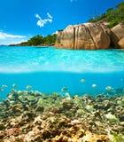 Koraalrif en vissen in Seychellen Royalty-vrije Stock Foto