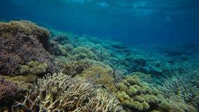 Koraalrif, Groot barrièrerif, Australië Onderwater landschap royalty-vrije stock fotografie