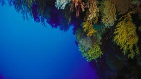 Koraalrif, Groot barrièrerif, Australië Onderwater landschap stock afbeeldingen