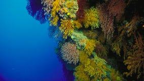 Koraalrif, Groot barrièrerif, Australië Onderwater landschap royalty-vrije stock afbeelding