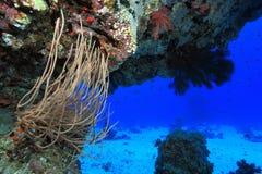 Koraalrif in het rode overzees Stock Foto's