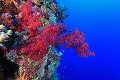 Koraalrif in het Rode Overzees Royalty-vrije Stock Foto
