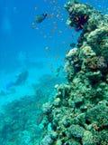Koraalrif met duiker Royalty-vrije Stock Afbeeldingen
