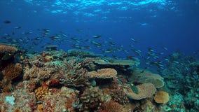 Koraalrif met gezonde harde koralen Stock Foto's