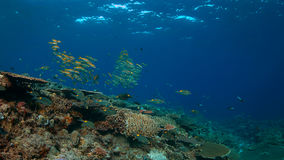 Koraalrif met gezonde harde koralen Stock Foto