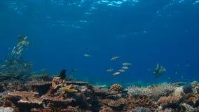 Koraalrif met gezonde harde koralen Royalty-vrije Stock Afbeeldingen