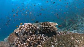 Koraalrif met gezonde harde koralen en overvloedsvissen Royalty-vrije Stock Foto