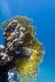 Koraalrif met groot brandkoraal op de bodem van royalty-vrije stock foto